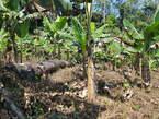 Terrains titré à vendre - Cameroun