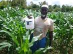 Super gro, engrais organique - Cameroun