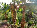 Terrain à vendre à logbessou non loin du goudron - Cameroun