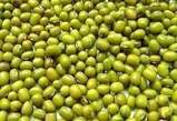 Mung Bean (Masho) - Ethiopia