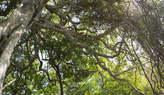 6 HA Pristinos Na Praia Da Ponta Mamoli  - Moçambique