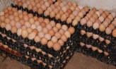 Crate of Eggs - Nigeria