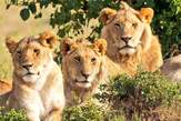 3 Days Vacation to Queen Elizabeth National Park - Uganda