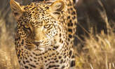 2 Day Queen Elizabeth national park safari in Uganda - Uganda